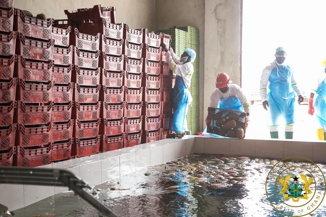 Ekumfi fruit and juices factory commissioning